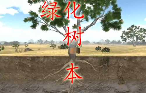 learn-chinese-tree-pic